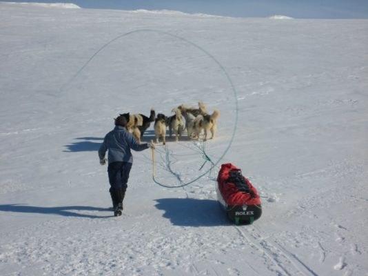 Not many polar expeditions still use huskies these days.