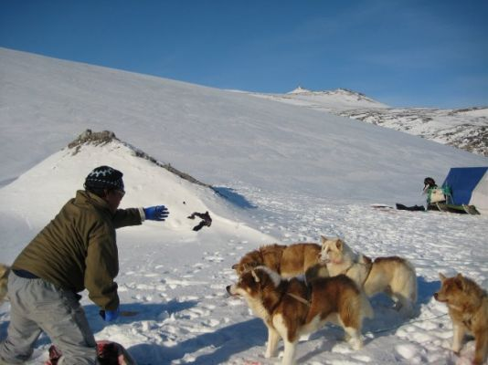 The Inuit guide accompanying them to the top of the glacier that gives access to Greenland's polar icecap is feeding the dogs.