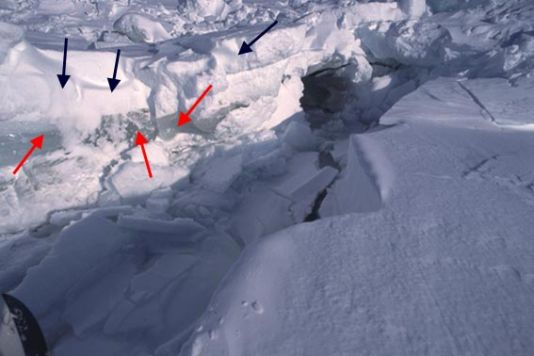 In this photograph one clearly sees the difference between the youngest ice (just a few weeks) and the older ice (one year at least). The younger ice is clearer in colour and is marked by black arrows; the older, just beneath, is marked by red arrows (see 2nd lesson in the following photograph).